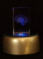 Crystal Brain Hologram w/ LED Base - PRM-CRYSBR